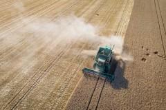 Moissonneuse batteuse dans un champ de blé